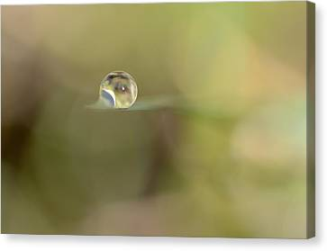A Drop Of Subtlety Canvas Print