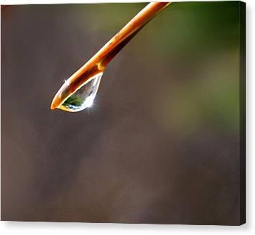 ...a Drop Of Sunlight Canvas Print