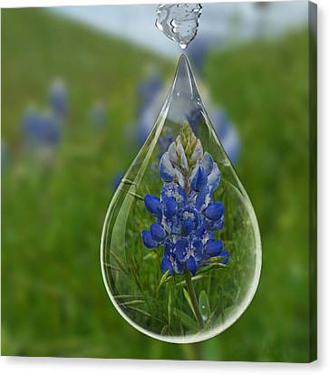 A Drop Of Texas Blue Canvas Print by ARTography by Pamela Smale Williams