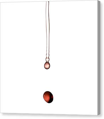 A Drop Of Wine Canvas Print by Frank Tschakert