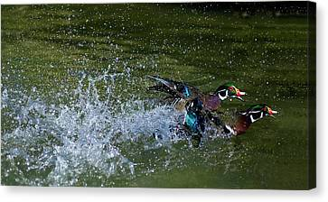 Canvas Print featuring the photograph A Duck Race by Thanh Thuy Nguyen