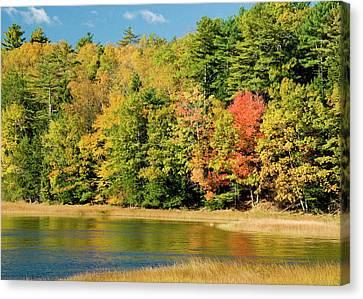 A Fall Pond   Canvas Print