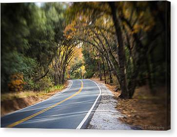 A Fall Roadway Canvas Print