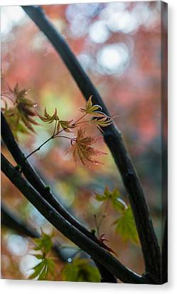 A Falls Colors Canvas Print by Mike Reid