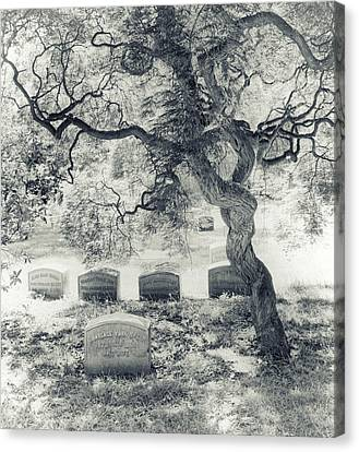 A Family Tree  Canvas Print