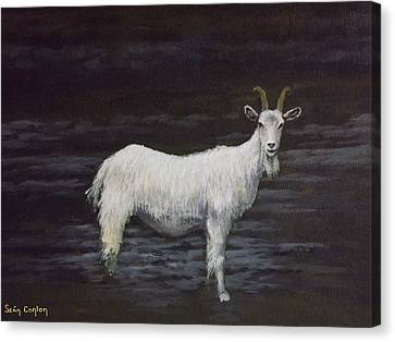 A Feral Goat On The Burren Canvas Print by Sean Conlon