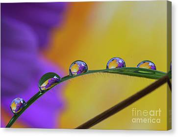 A Few Drops Canvas Print by Veikko Suikkanen