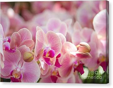 A Field Of Flowers Canvas Print by A New Focus Photography