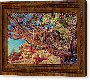 A Fighter Tree Canvas Print by John M Bailey