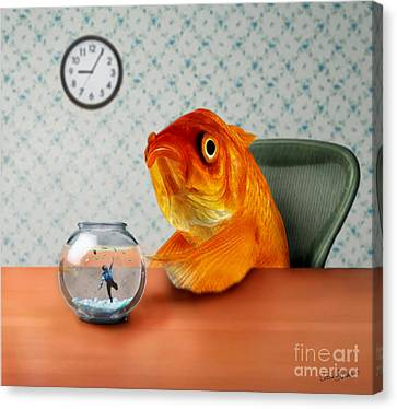 Fish Canvas Print - A Fish Out Of Water by Carrie Jackson