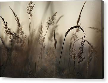 A Foggy Autumn Morning On The Kansas Canvas Print by Jim Richardson