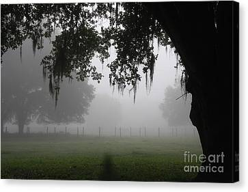 A Foggy Day In Rural Fl Canvas Print by Marilyn Carlyle Greiner