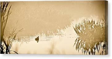 A Foggy Morning Swim Canvas Print by Carolyn Marshall