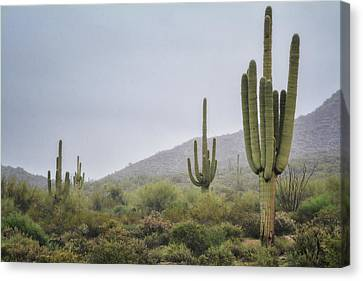 A Foggy Sonoran Day  Canvas Print by Saija Lehtonen