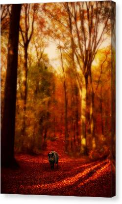 A Forest Canvas Print by Studio Yuki