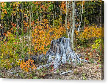A Forest Of Color Canvas Print by Stephen  Johnson