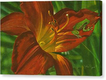 A Frog On A Lily Canvas Print