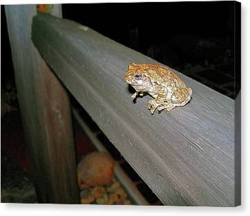 A Frog Went A Courting Canvas Print by Randy Rosenberger