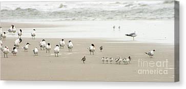 Beach Theme Decorating Canvas Print - A Gaggle Of Seabirds by Angela Rath