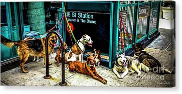A Gang Of Dogs In Nyc Canvas Print by Julian Starks