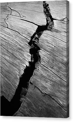 A Giants Death-bark Detail Canvas Print by Brigid Nelson