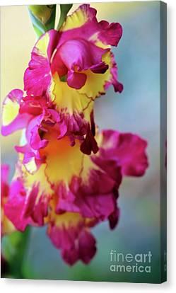 A Gladiolus 3 Canvas Print