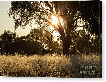 Canvas Print featuring the photograph A Golden Afternoon by Linda Lees