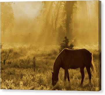 A Golden Moment Canvas Print by Ron  McGinnis