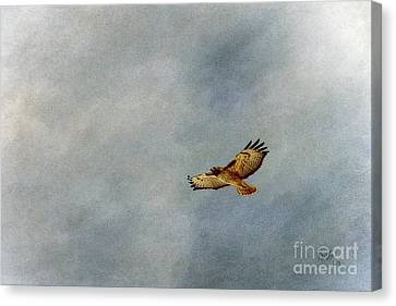 A Good Day To Fly Canvas Print by Krista-
