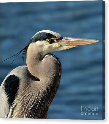 Canvas Print featuring the photograph A Great Blue Heron Posing by Susan Wiedmann
