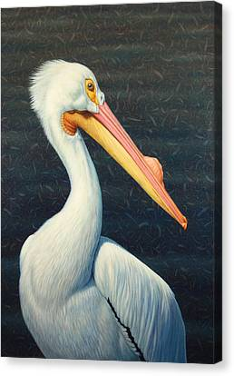White Birds Canvas Print - A Great White American Pelican by James W Johnson