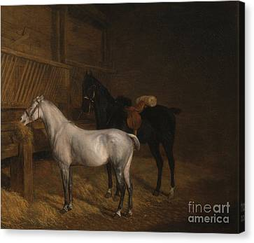 A Grey Pony And A Black Charger Canvas Print by Celestial Images