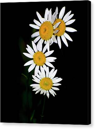Canvas Print featuring the digital art A Group Of Wild Daisies by Chris Flees