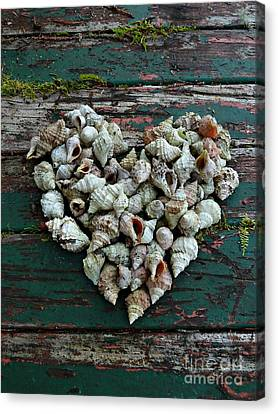 A Heart Made Of Shells Canvas Print