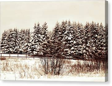 A Herd Of Trees Canvas Print by William Tasker