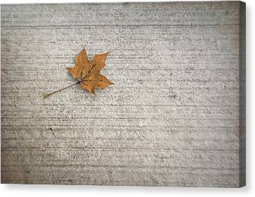 Maple Season Canvas Print - A Hint Of Autumn by Scott Norris