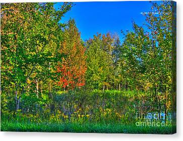 Autum Abstract Canvas Print - A Hint Off Fall by Robert Pearson