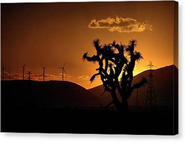 Canvas Print featuring the photograph A Holy Joshua Tree by Peter Thoeny