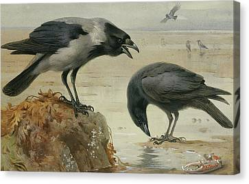 A Hooded Crow And A Carrion Crow Canvas Print by Archibald Thorburn