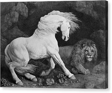 A Horse Affrighted By A Lion Canvas Print
