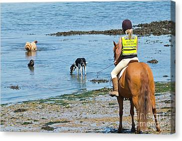 A Horse And Three Dogs At The Beach Canvas Print by Terri Waters