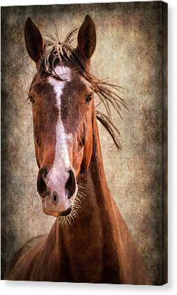 A Horse Of Course Canvas Print