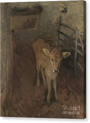 Shed Canvas Print - A Jersey Calf, 1893 by John Singer Sargent