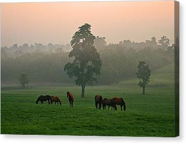 A Kentucky Morning. Canvas Print by Ulrich Burkhalter