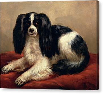 A King Charles Spaniel Seated On A Red Cushion Canvas Print by Eugene Joseph Verboeckhoven
