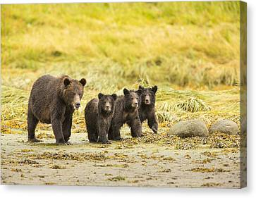 Prints Of Alaska Canvas Print - A Large Family by Tim Grams