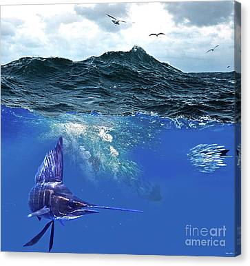 A Large Sailfish, Herding Schools Of Fish Canvas Print by Thomas Pollart