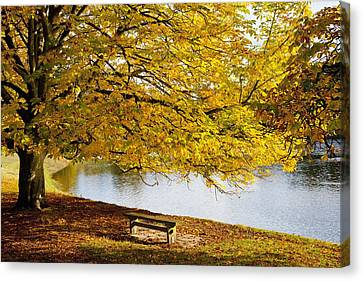 A Large Tree And Bench Along The Water Canvas Print by John Short