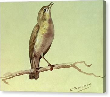 A Lark Canvas Print by Archibald Thorburn