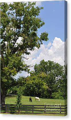 A Lazy Summer Day  Canvas Print